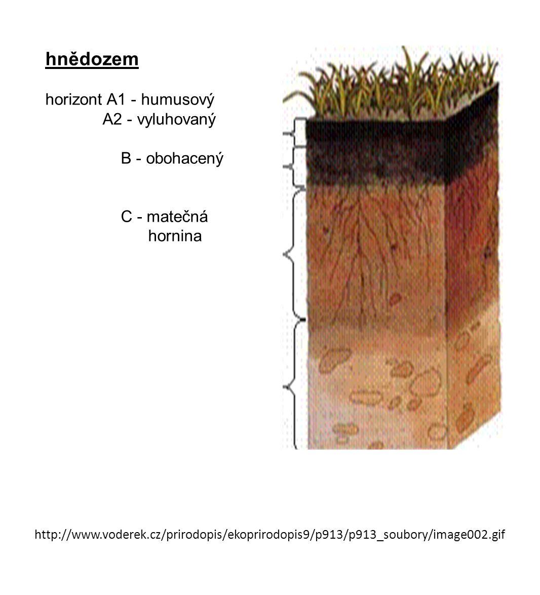 hnědozem horizont A1 - humusový A2 - vyluhovaný B - obohacený