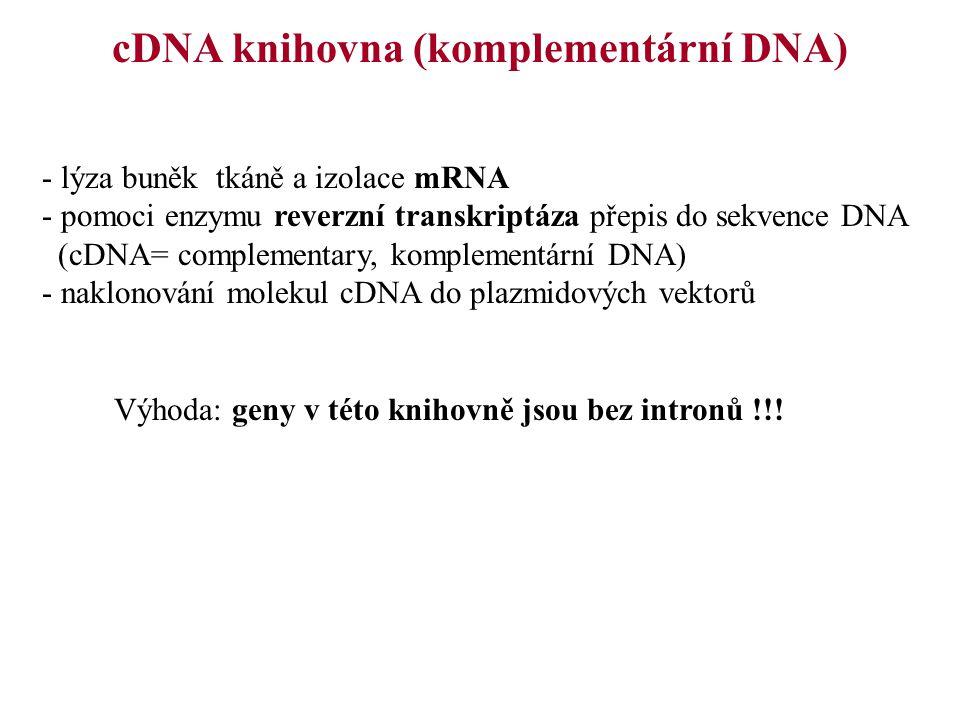 cDNA knihovna (komplementární DNA)