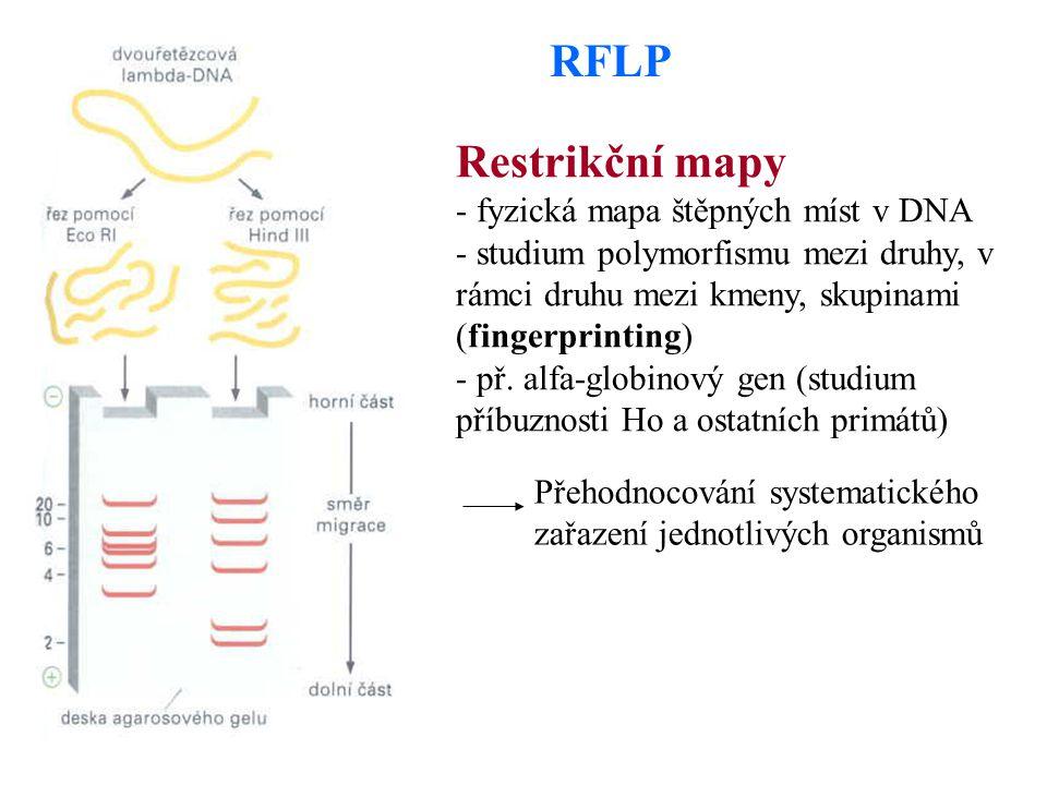 RFLP Restrikční mapy - fyzická mapa štěpných míst v DNA