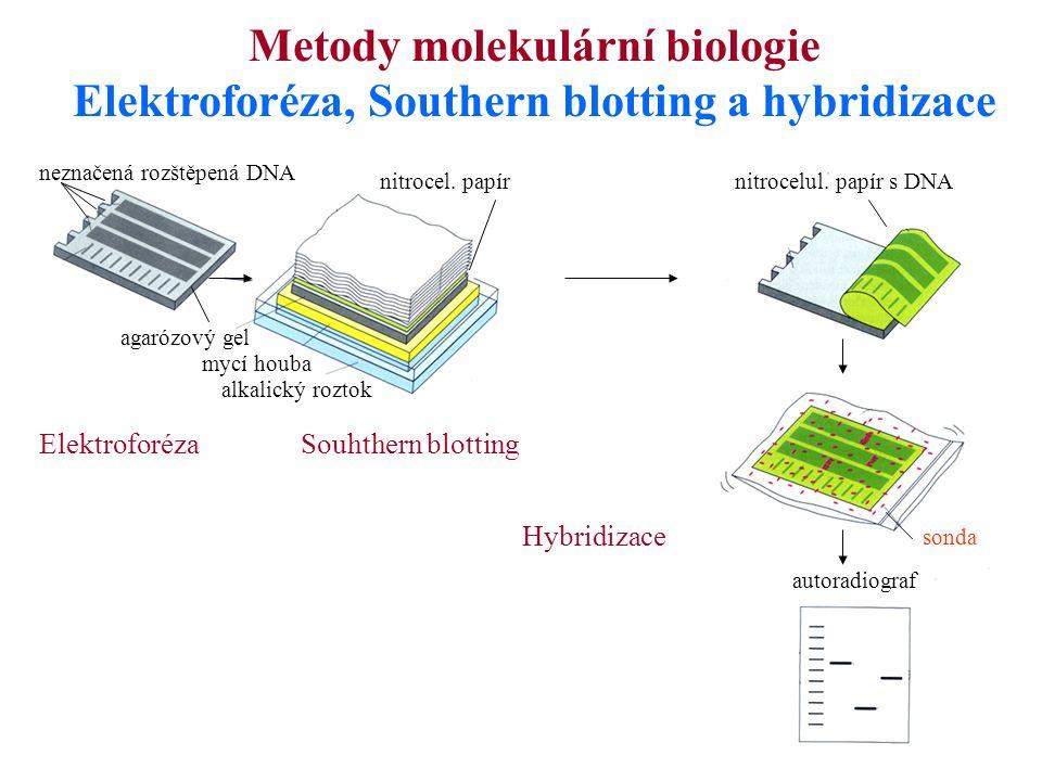 Elektroforéza, Southern blotting a hybridizace