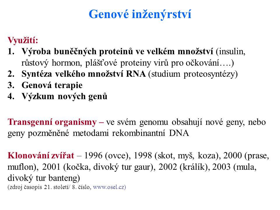 Genové inženýrství Využití: