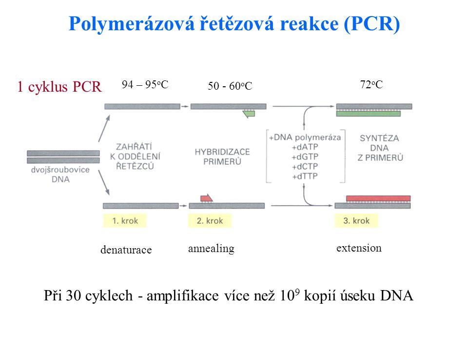 Polymerázová řetězová reakce (PCR)