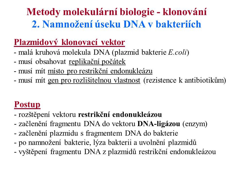 2. Namnožení úseku DNA v bakteriích