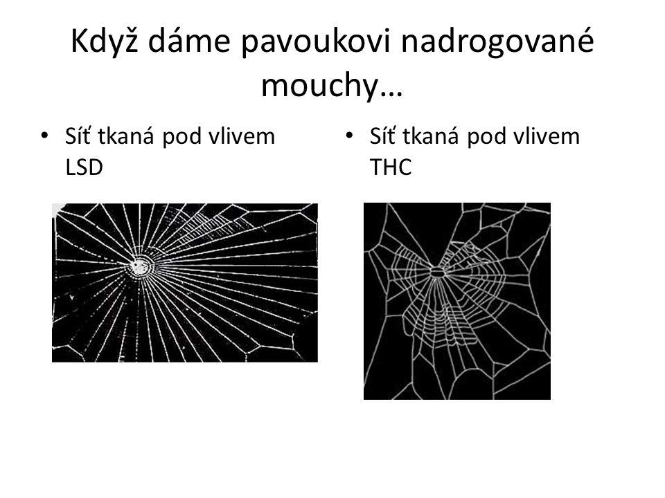 Když dáme pavoukovi nadrogované mouchy…