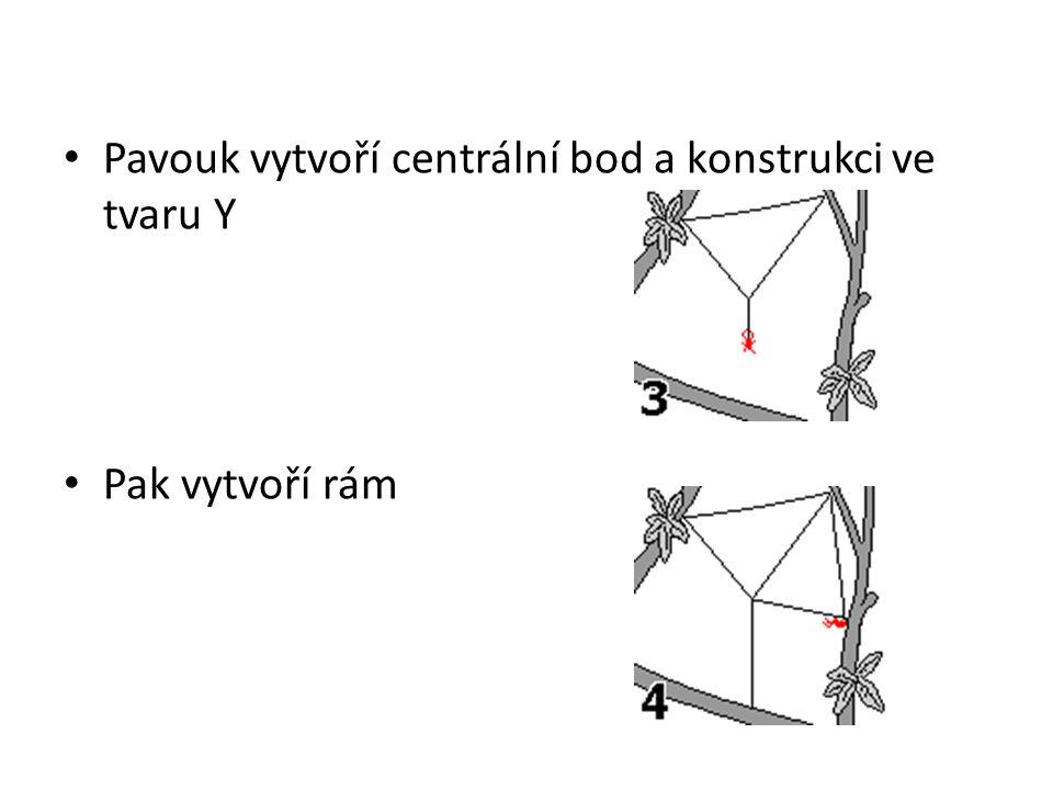 Pavouk vytvoří centrální bod a konstrukci ve tvaru Y