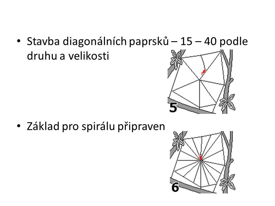 Stavba diagonálních paprsků – 15 – 40 podle druhu a velikosti