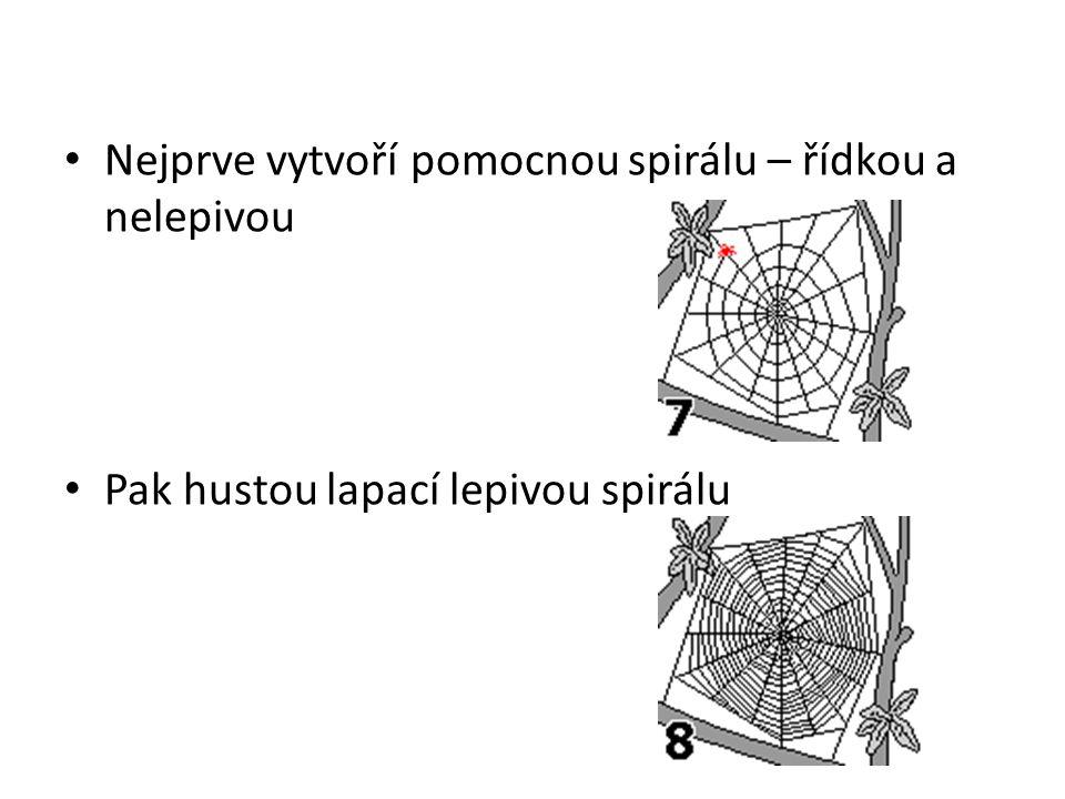 Nejprve vytvoří pomocnou spirálu – řídkou a nelepivou