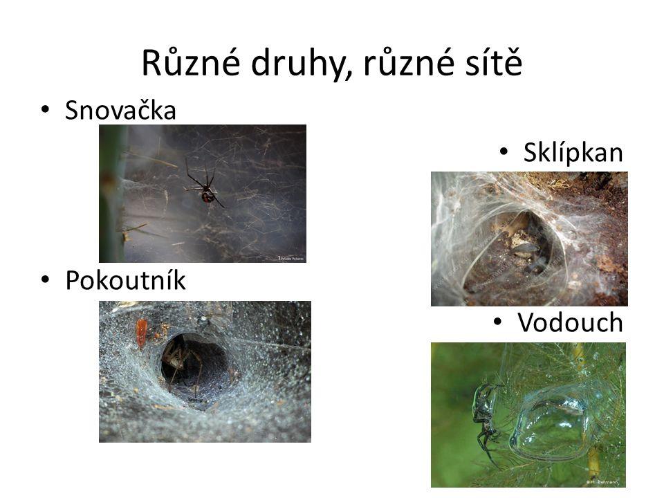 Různé druhy, různé sítě Snovačka Sklípkan Pokoutník Vodouch