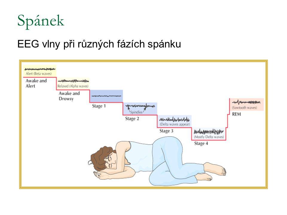 Spánek EEG vlny při různých fázích spánku