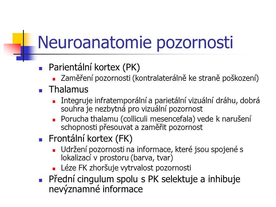 Neuroanatomie pozornosti