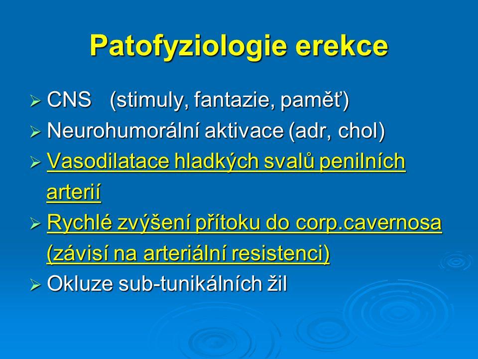 Patofyziologie erekce