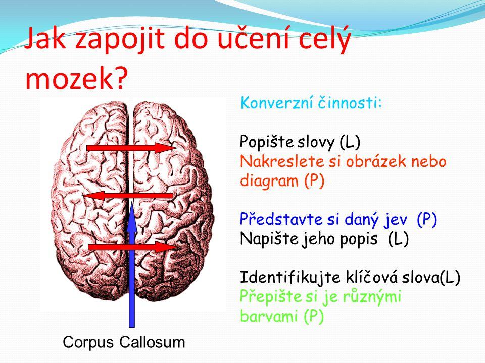 Jak zapojit do učení celý mozek