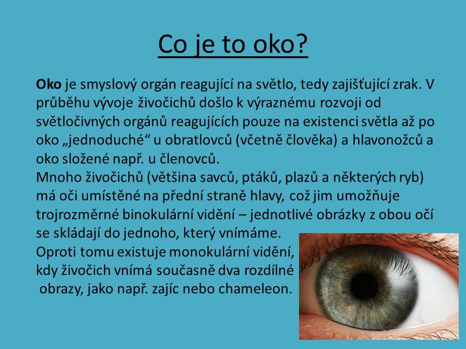Co je to oko