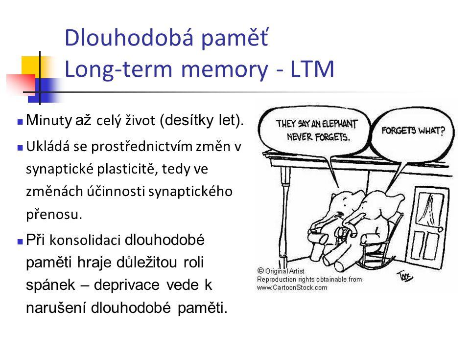 Dlouhodobá paměť Long-term memory - LTM