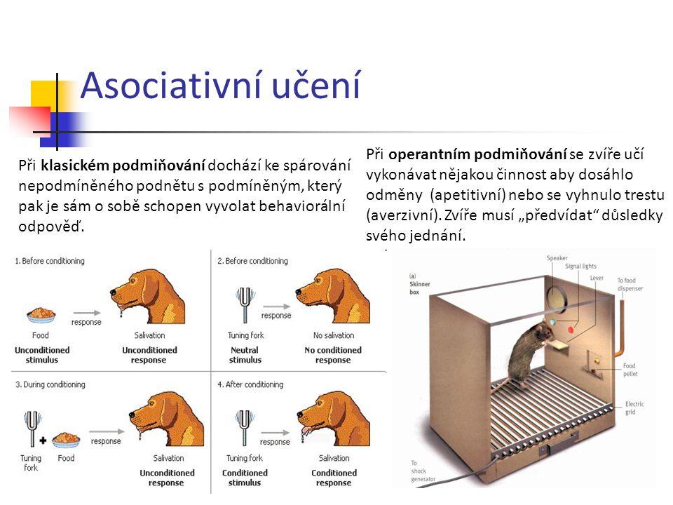 Asociativní učení