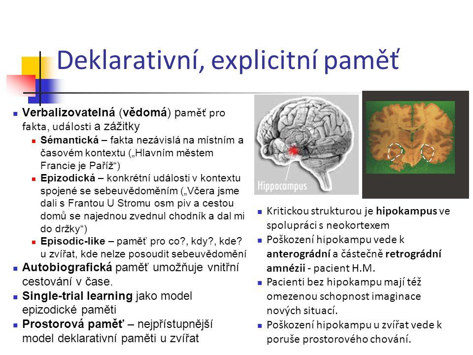 Deklarativní, explicitní paměť