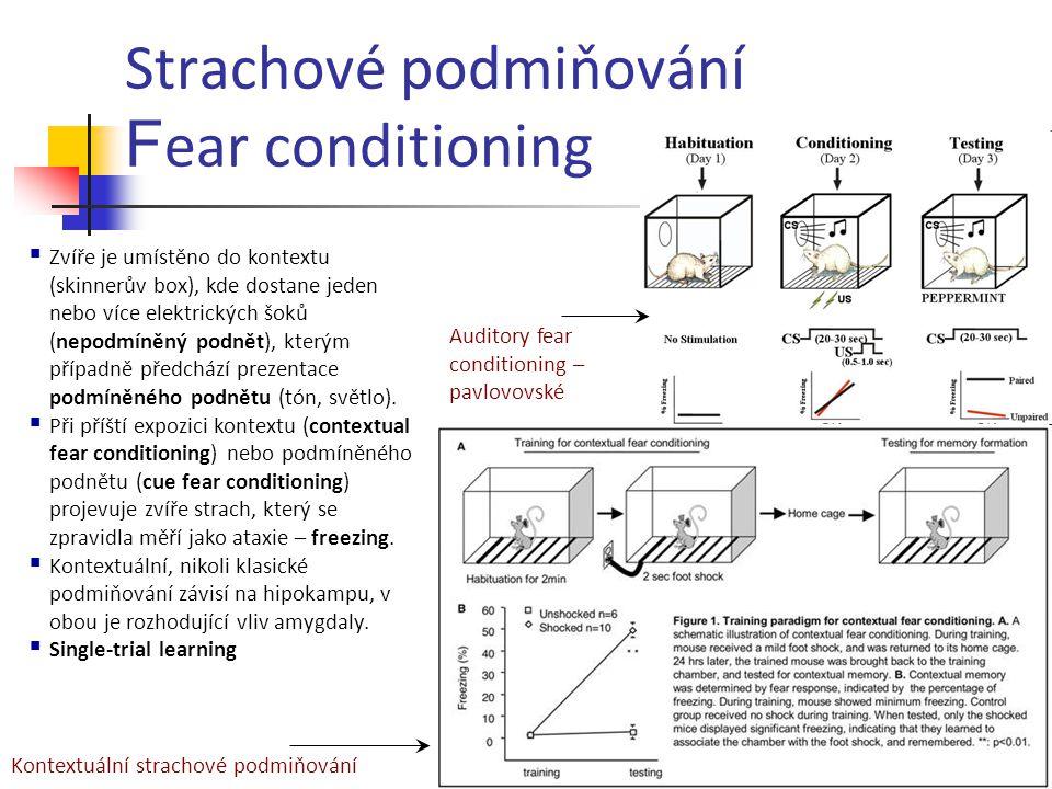Strachové podmiňování Fear conditioning