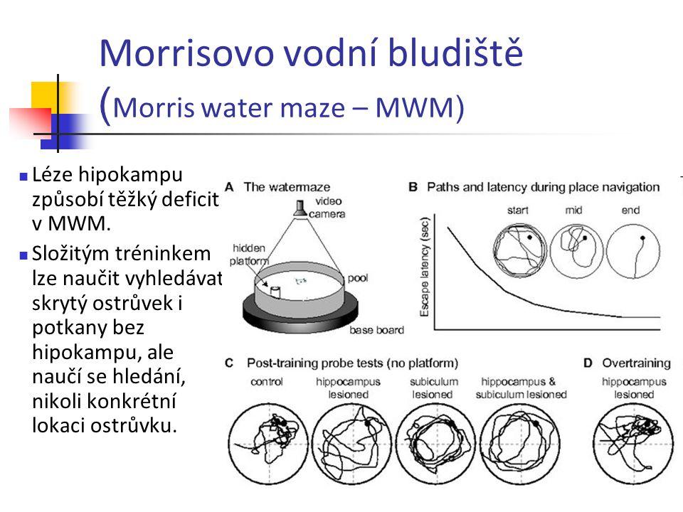 Morrisovo vodní bludiště (Morris water maze – MWM)