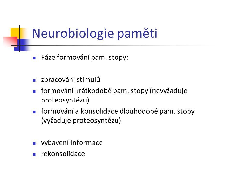 Neurobiologie paměti Fáze formování pam. stopy: zpracování stimulů