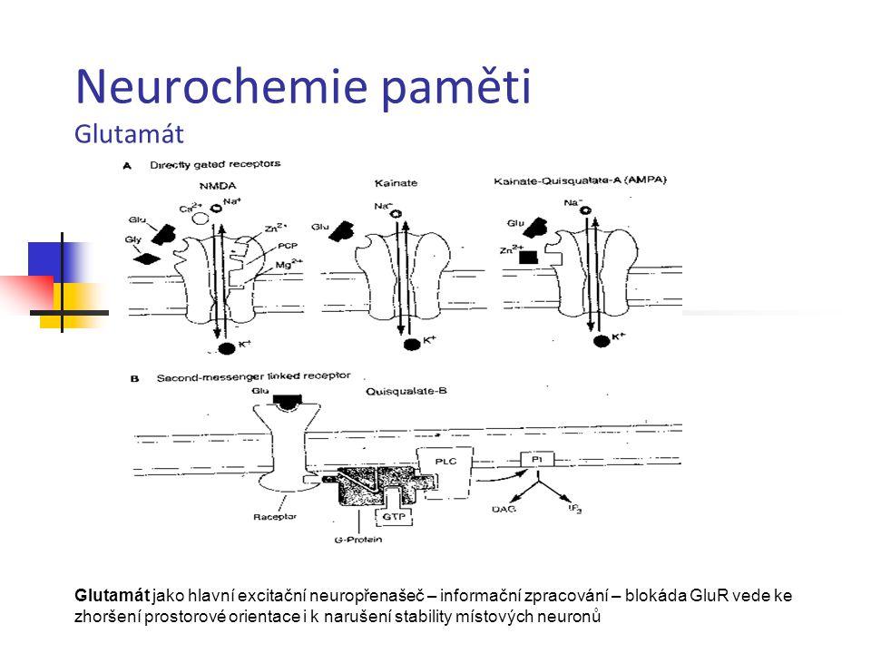 Neurochemie paměti Glutamát