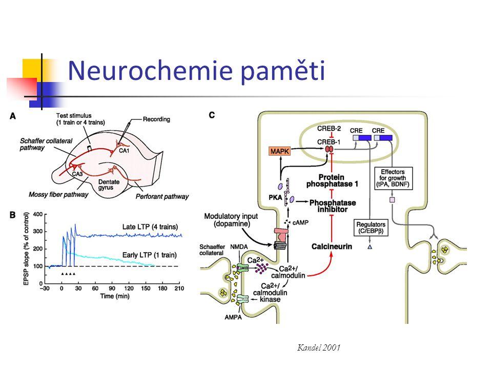 Neurochemie paměti Kandel 2001
