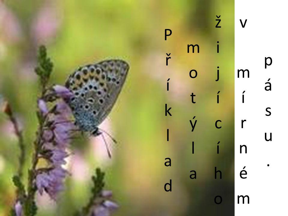 Příklad motýla žijícíhov mírném pásu.