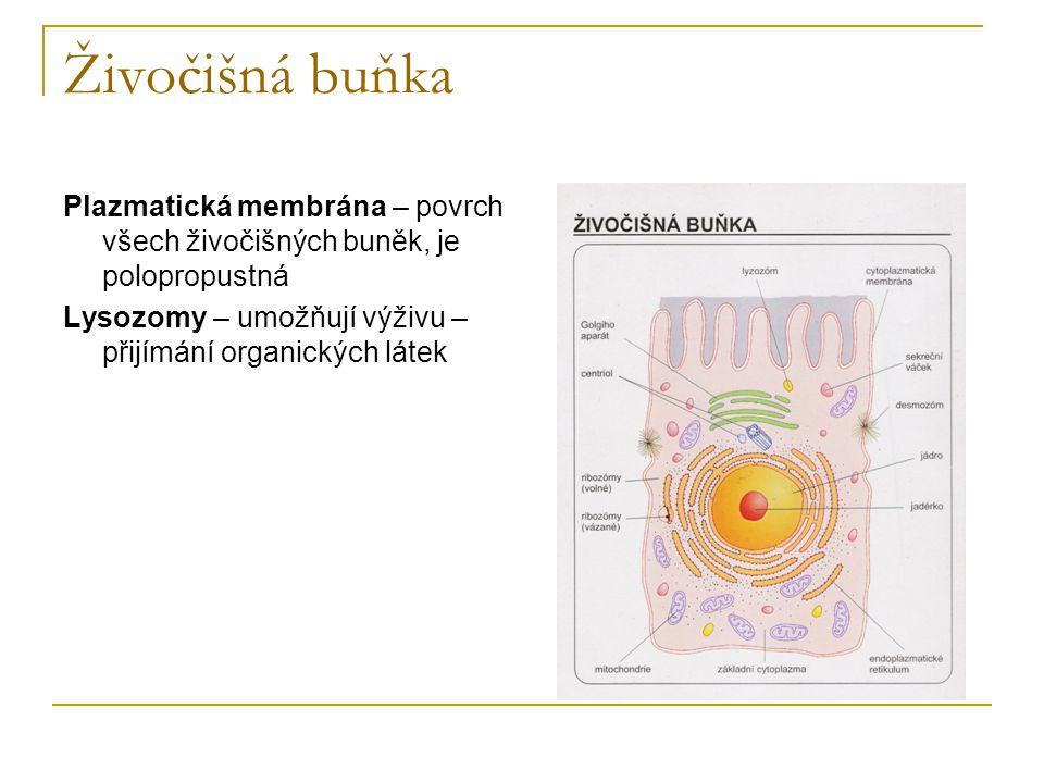 Živočišná buňka Plazmatická membrána – povrch všech živočišných buněk, je polopropustná.