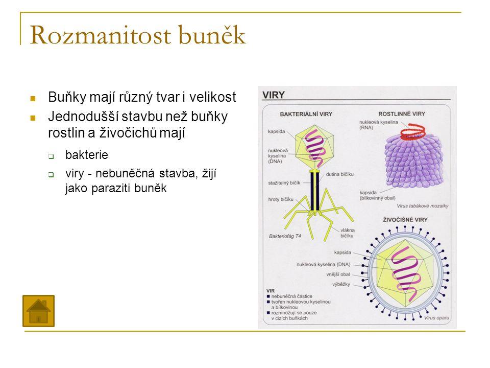 Rozmanitost buněk Buňky mají různý tvar i velikost
