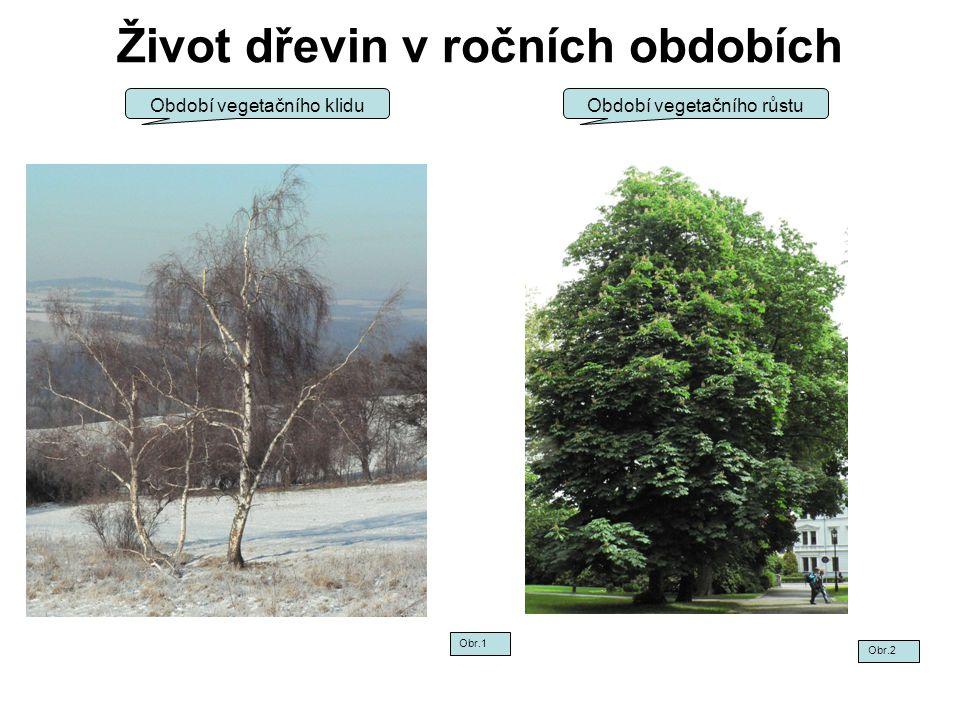 Život dřevin v ročních obdobích