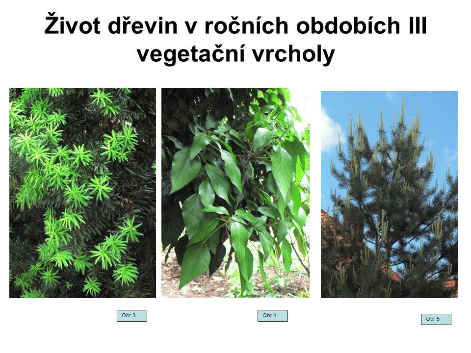 Život dřevin v ročních obdobích III vegetační vrcholy