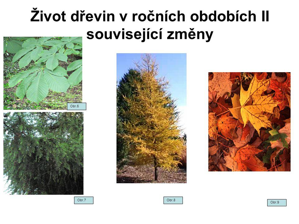 Život dřevin v ročních obdobích II související změny