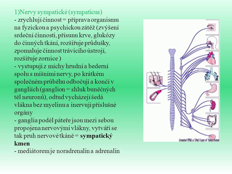 1)Nervy sympatické (sympaticus)