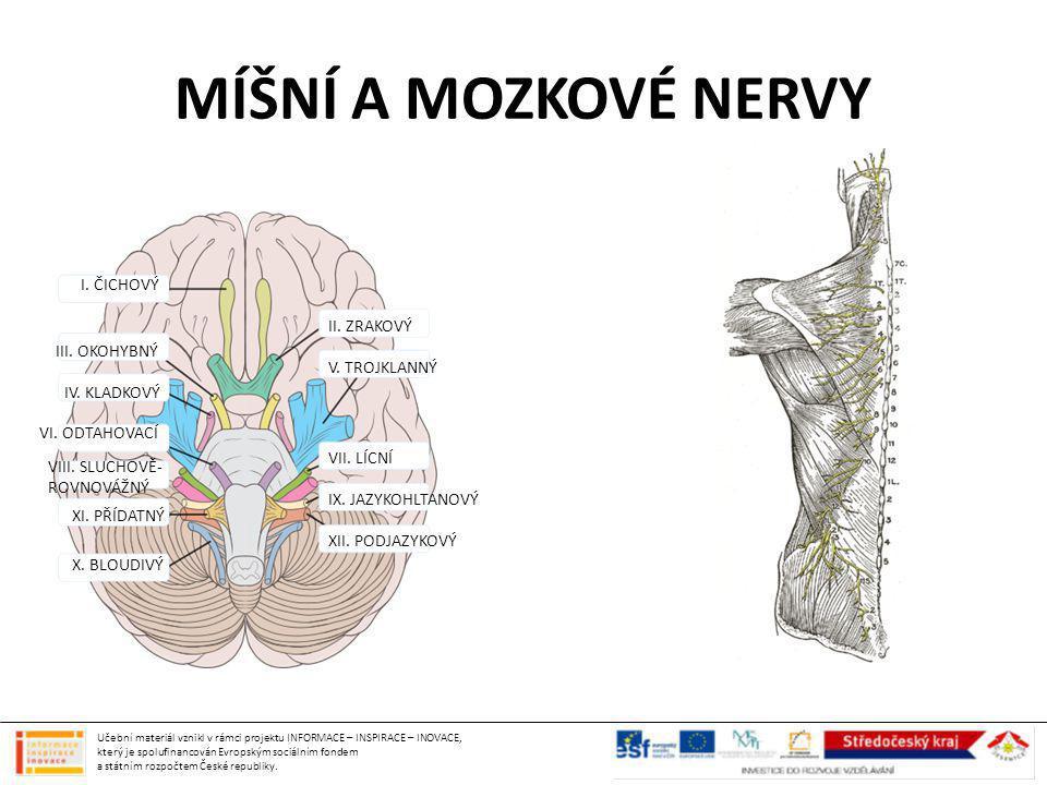 MÍŠNÍ A MOZKOVÉ NERVY I. ČICHOVÝ II. ZRAKOVÝ III. OKOHYBNÝ