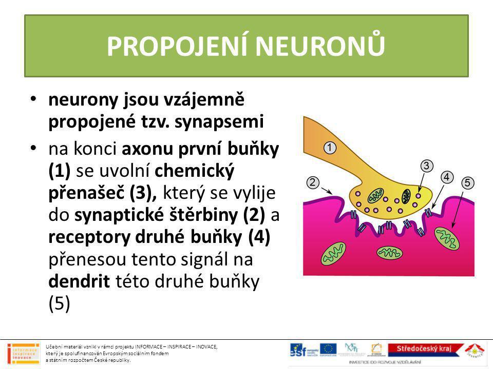 PROPOJENÍ NEURONŮ neurony jsou vzájemně propojené tzv. synapsemi