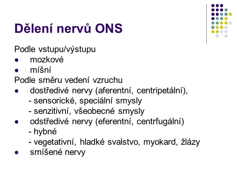 Dělení nervů ONS Podle vstupu/výstupu mozkové míšní