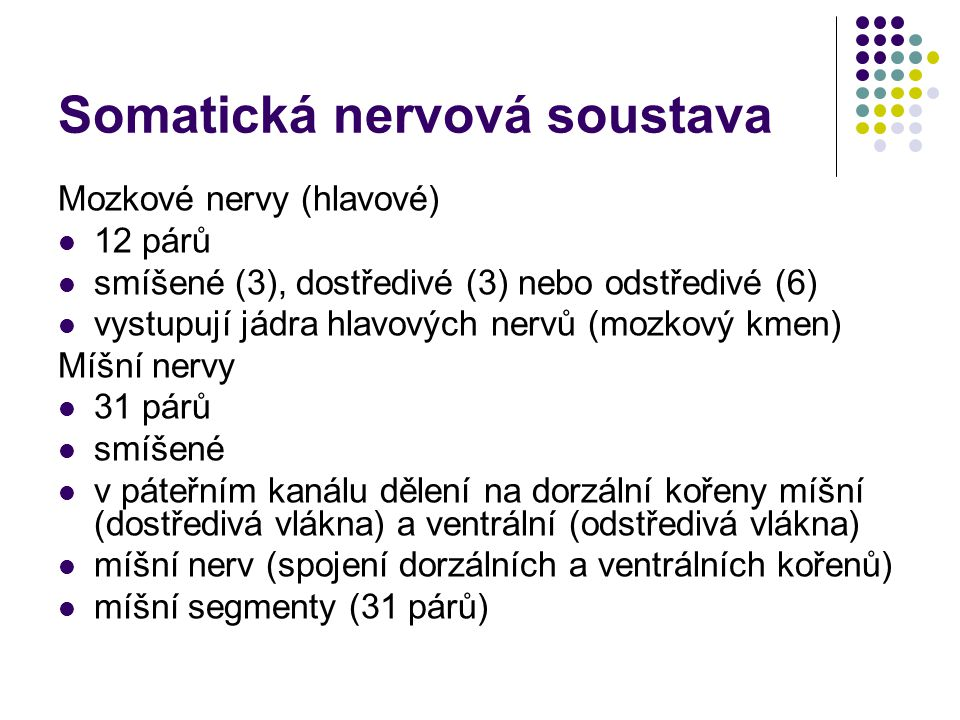 Somatická nervová soustava