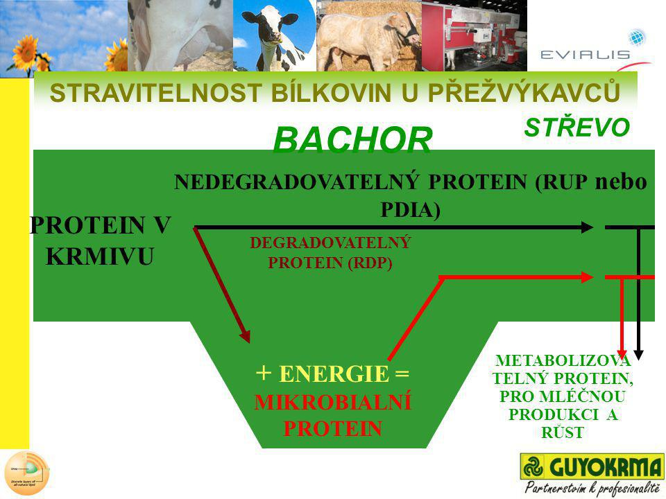 BACHOR + ENERGIE = MIKROBIALNÍ PROTEIN