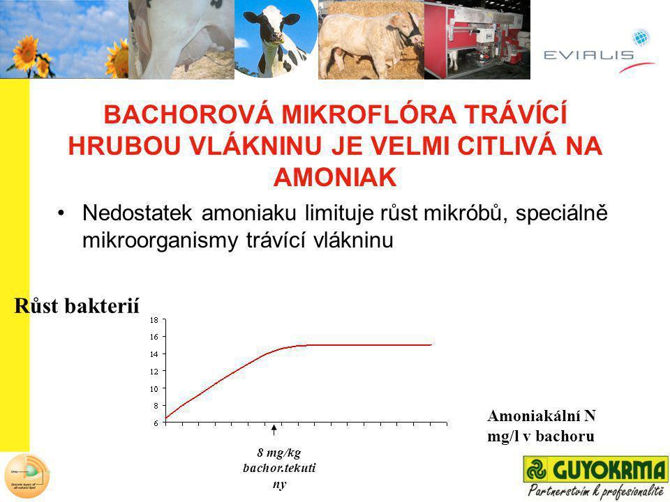 BACHOROVÁ MIKROFLÓRA TRÁVÍCÍ HRUBOU VLÁKNINU JE VELMI CITLIVÁ NA AMONIAK