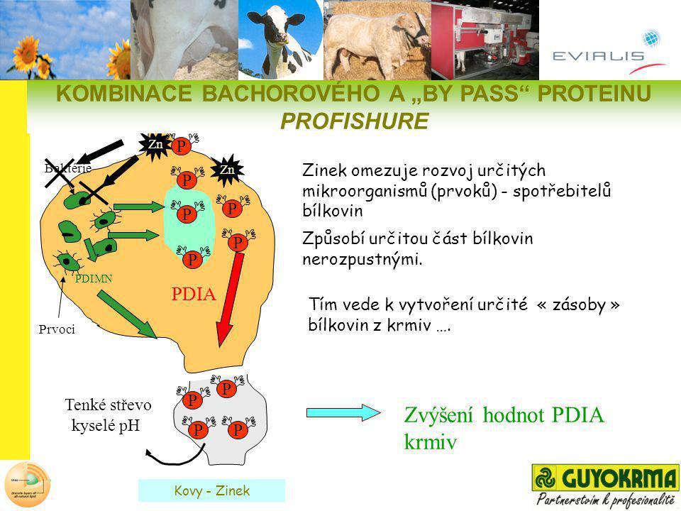 "KOMBINACE BACHOROVÉHO A ""BY PASS PROTEINU PROFISHURE"