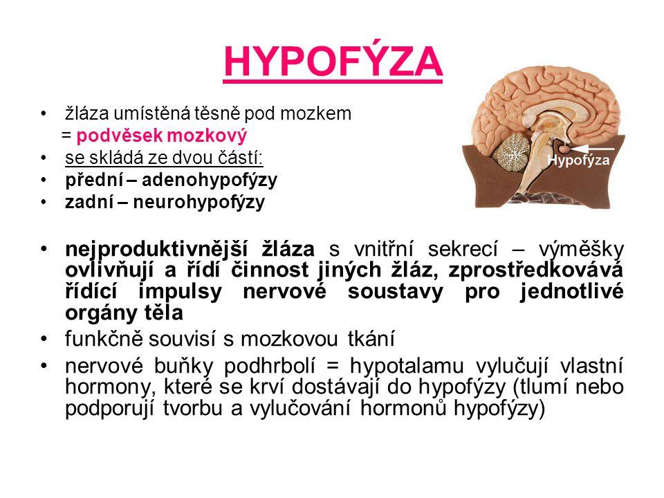 HYPOFÝZA žláza umístěná těsně pod mozkem. = podvěsek mozkový. se skládá ze dvou částí: přední – adenohypofýzy.