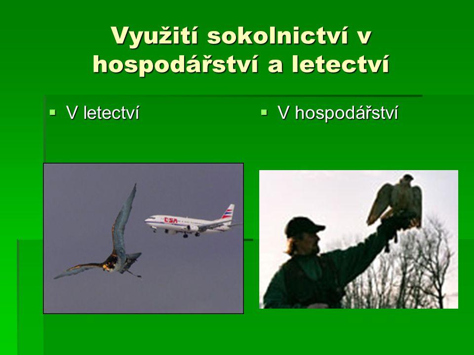 Využití sokolnictví v hospodářství a letectví