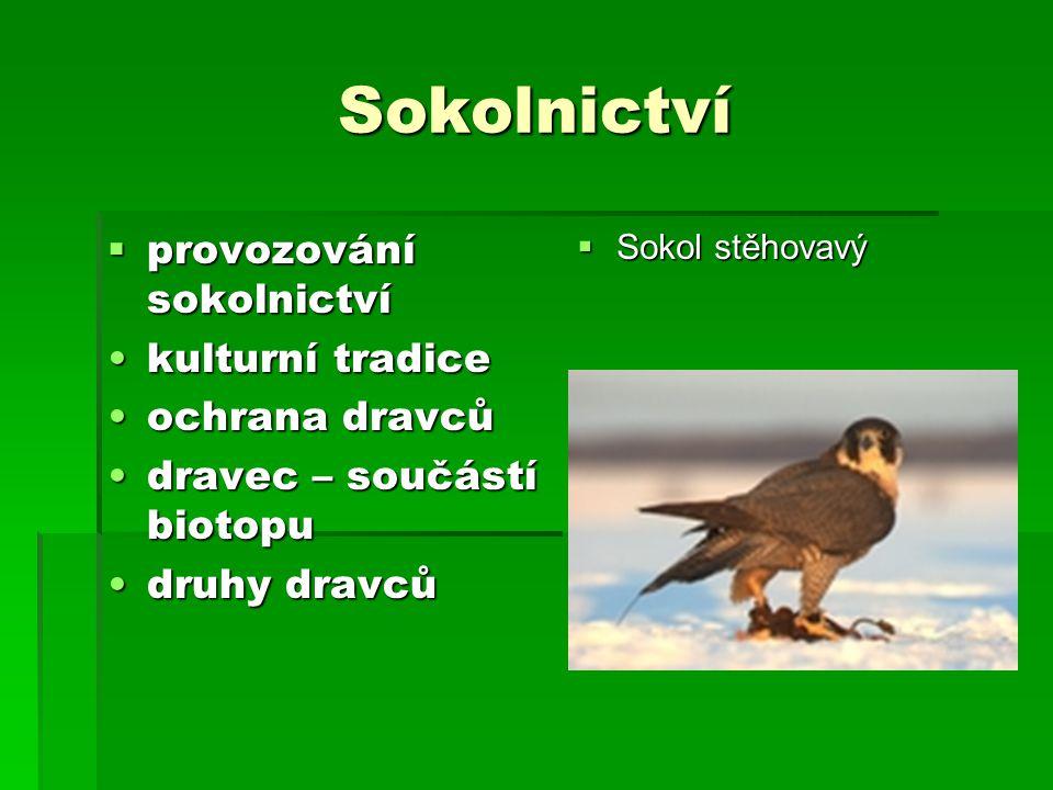 Sokolnictví provozování sokolnictví kulturní tradice ochrana dravců