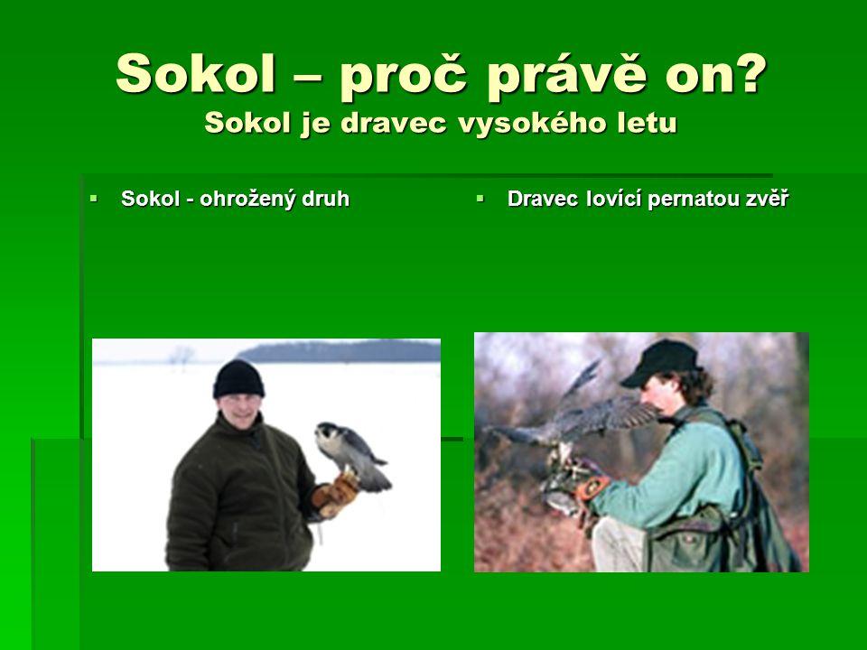 Sokol – proč právě on Sokol je dravec vysokého letu