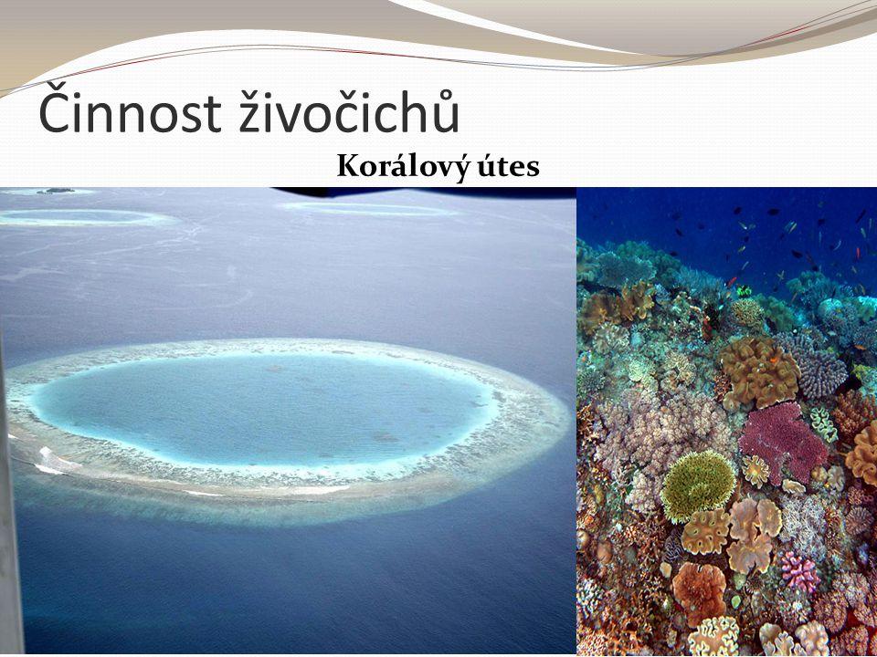 Činnost živočichů Korálový útes