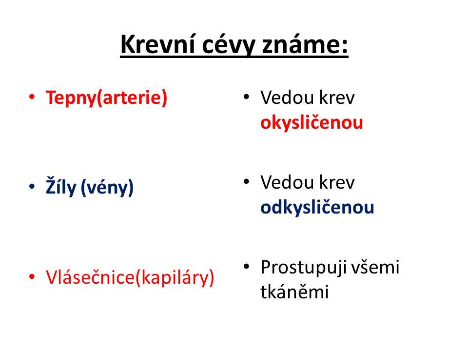 Krevní cévy známe: Tepny(arterie) Žíly (vény) Vlásečnice(kapiláry)