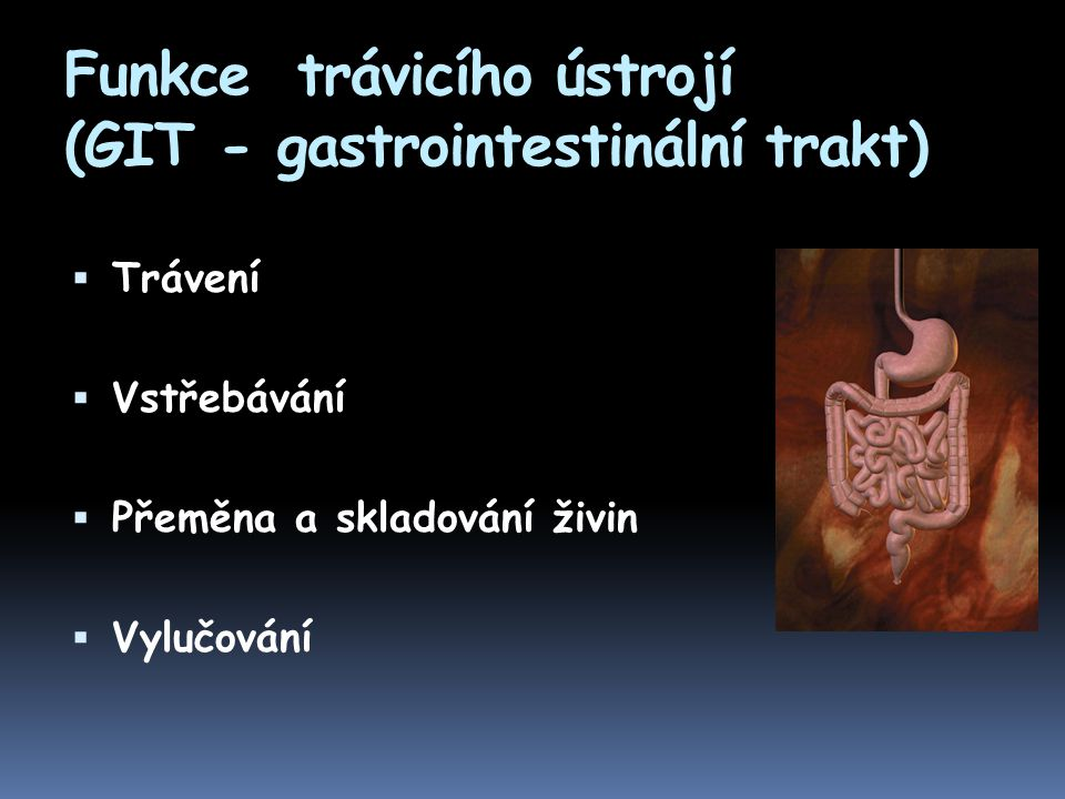 Funkce trávicího ústrojí (GIT - gastrointestinální trakt)