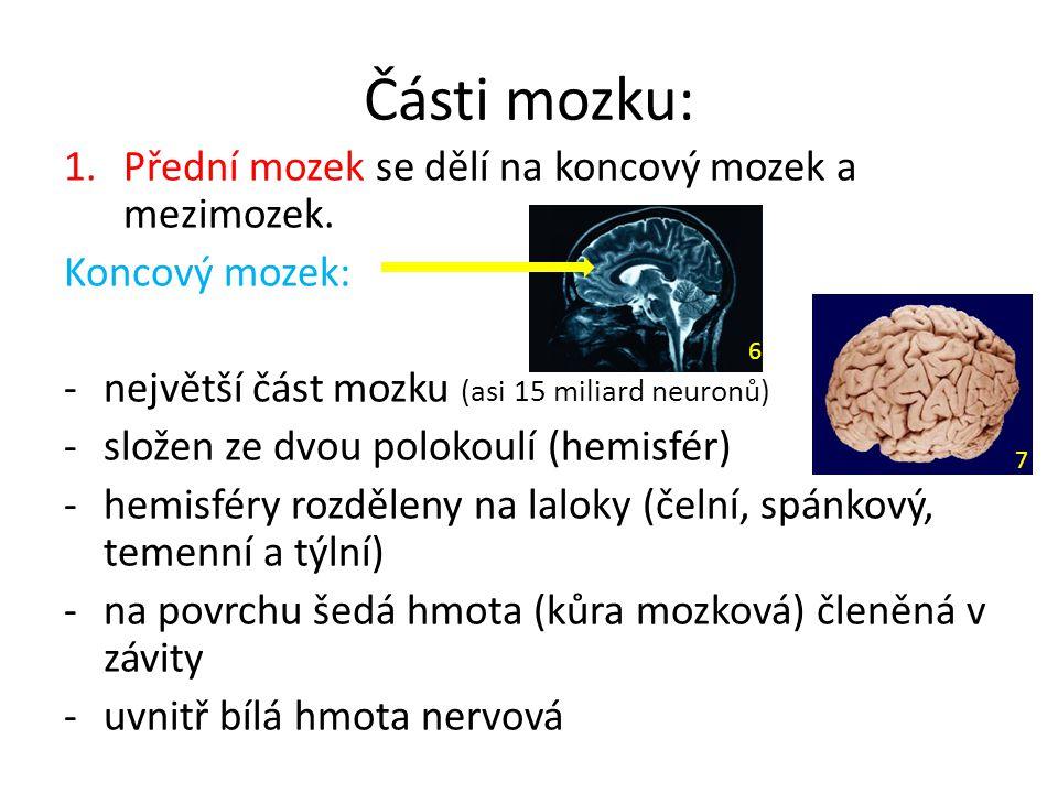 Části mozku: Přední mozek se dělí na koncový mozek a mezimozek.