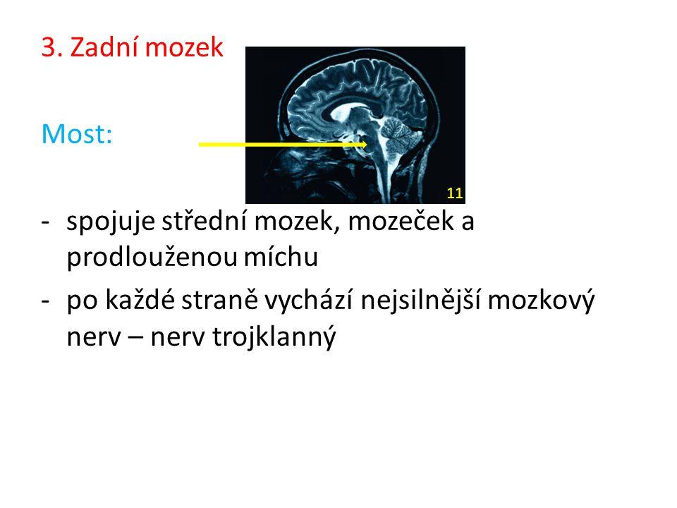 spojuje střední mozek, mozeček a prodlouženou míchu