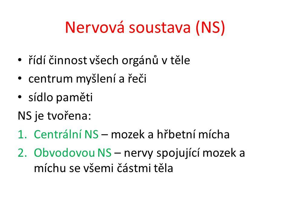 Nervová soustava (NS) řídí činnost všech orgánů v těle
