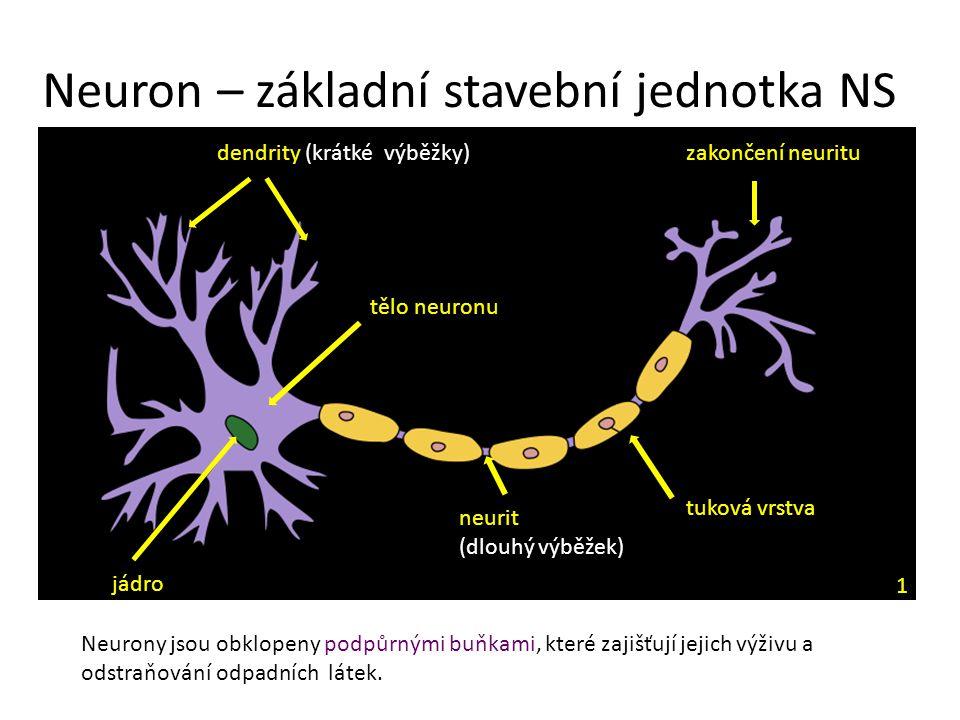 Neuron – základní stavební jednotka NS